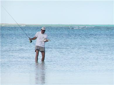 OCEANFRONT 3br  HOUSE SECLUDED SANDY BEACH, ANDROS BAHAMAS Vacation Rental Spearfishing Catch of the day
