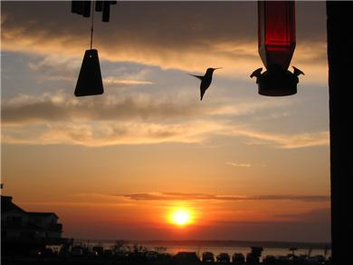 Jamacia IV Condo on 56th St - Romantic Bayside Getaway Vacation Rental Humming Bird visitor at sunset..view from porch