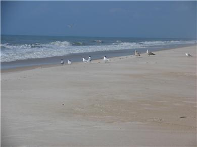 C-Shell Vacation Rental Unspoiled Beach